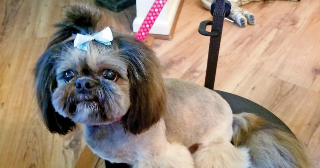 dog grooming ideas